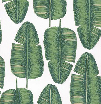 обои с пальмовыми листьями KWA704 Khroma Zoom